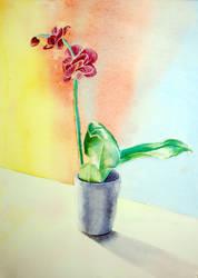 Orchid by Skulligan