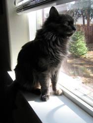 Lily Cat by MySquareBalloon