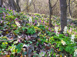 Spring on Balaton Uplands