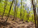 Spring forest on Balaton Uplands