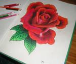 Flower 003 Red rose