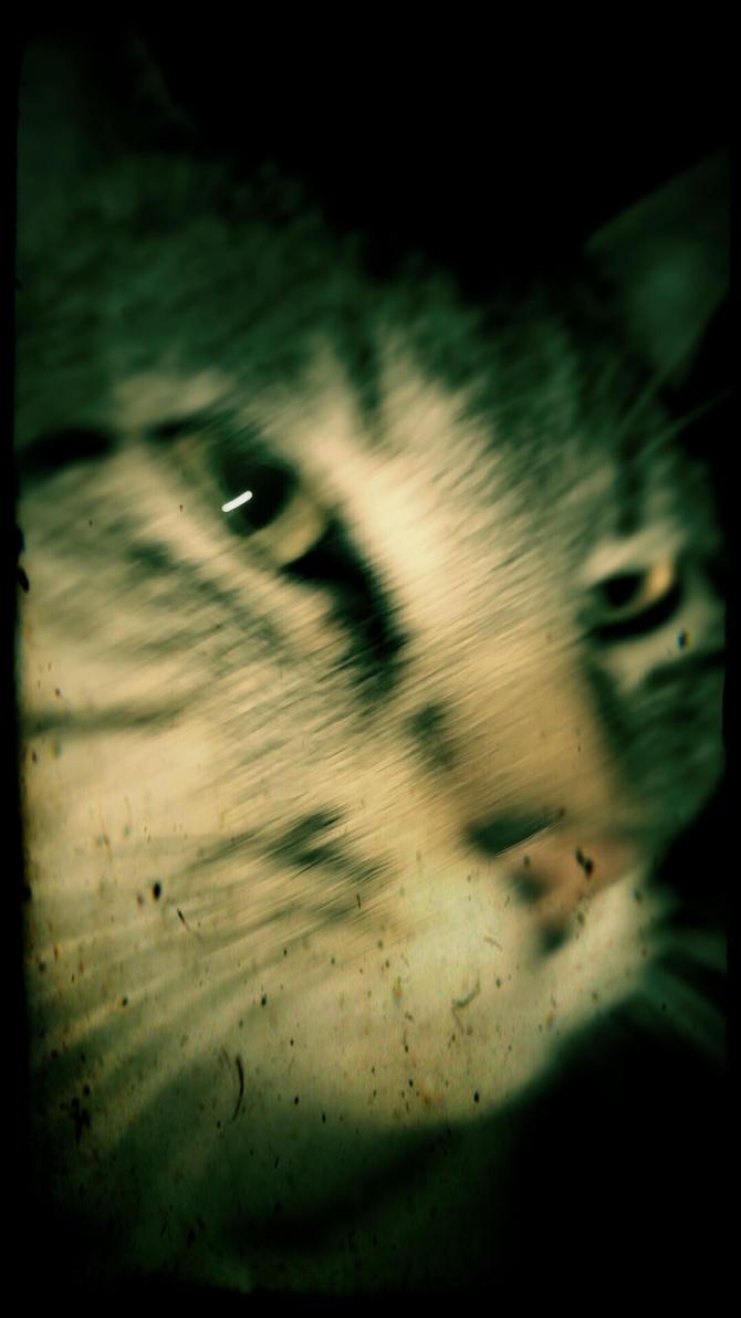 Cat in Motion by ProfessorJai