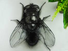 1housefly by ddrawanart