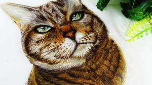 Cat by ddrawanart