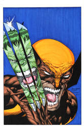 Hulk Wolverine A colors