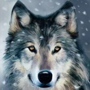 BlizzardStorm13's Profile Picture
