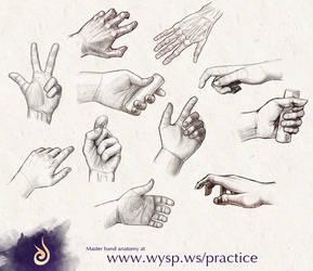 Hand anatomy