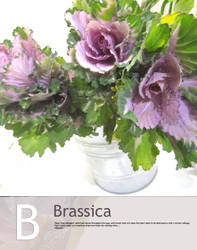 B is for Cabbage in floral by Toash