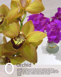 O is for 'Orchidaceae' in Floral by Toash