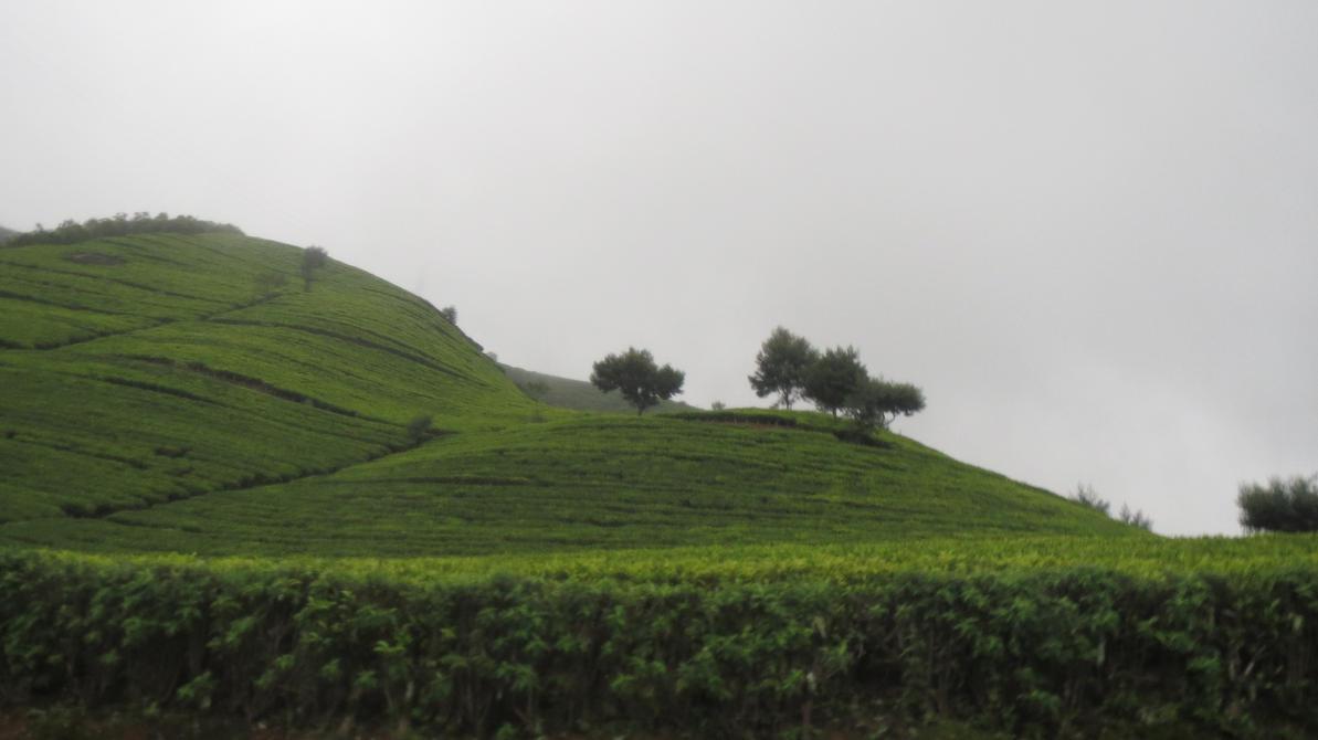 tea by Toash