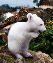 Garden Polar Bear by PigParadise