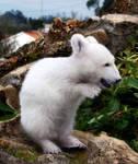Garden Polar Bear