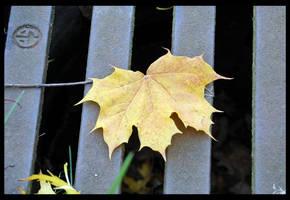 Autumn's steel by Chalybis