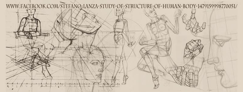 Study of structure of human body (page) by StefanoLanza on DeviantArt
