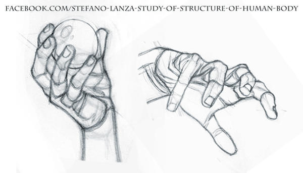 Study by StefanoLanza