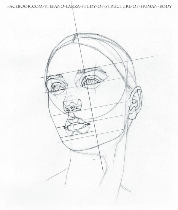 Line Drawing Of Human Face : Study by stefanolanza on deviantart