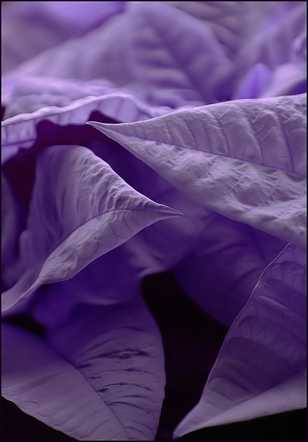in purple mood by grandma-S ...