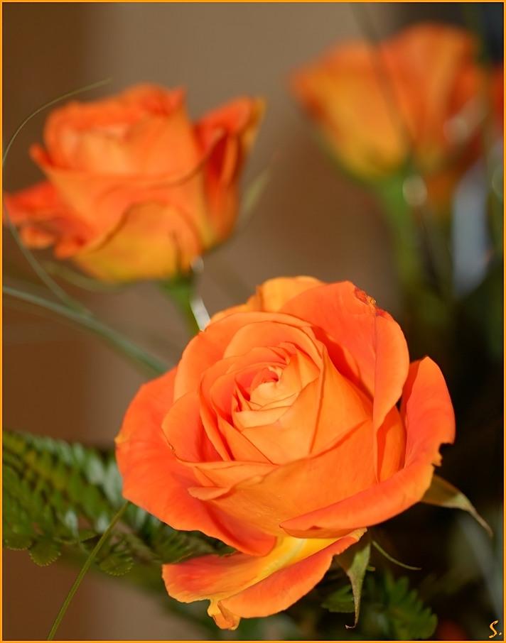 Te regalo una rosa - Página 14 For_sad_difficult_days_____by_grandma_S