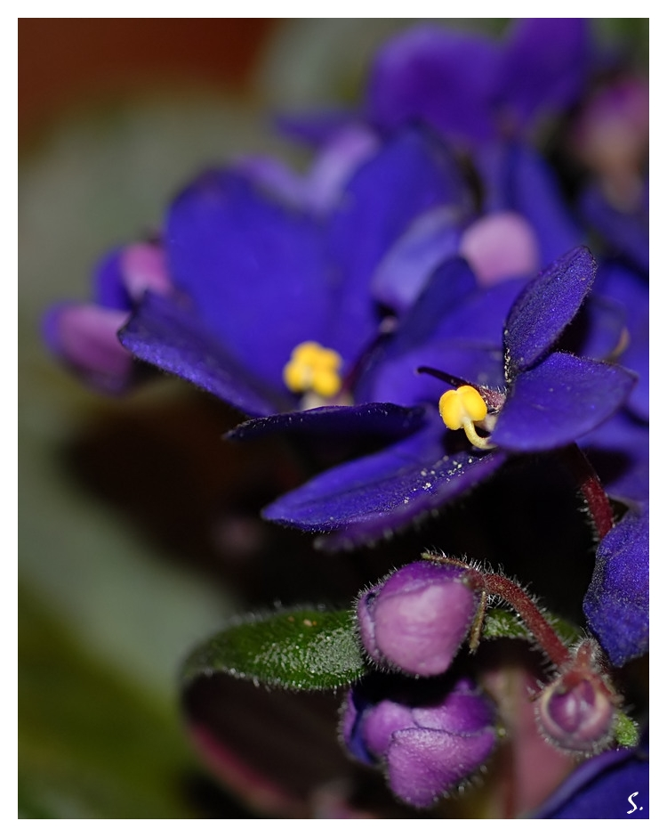 from my winter garden... by grandma-S