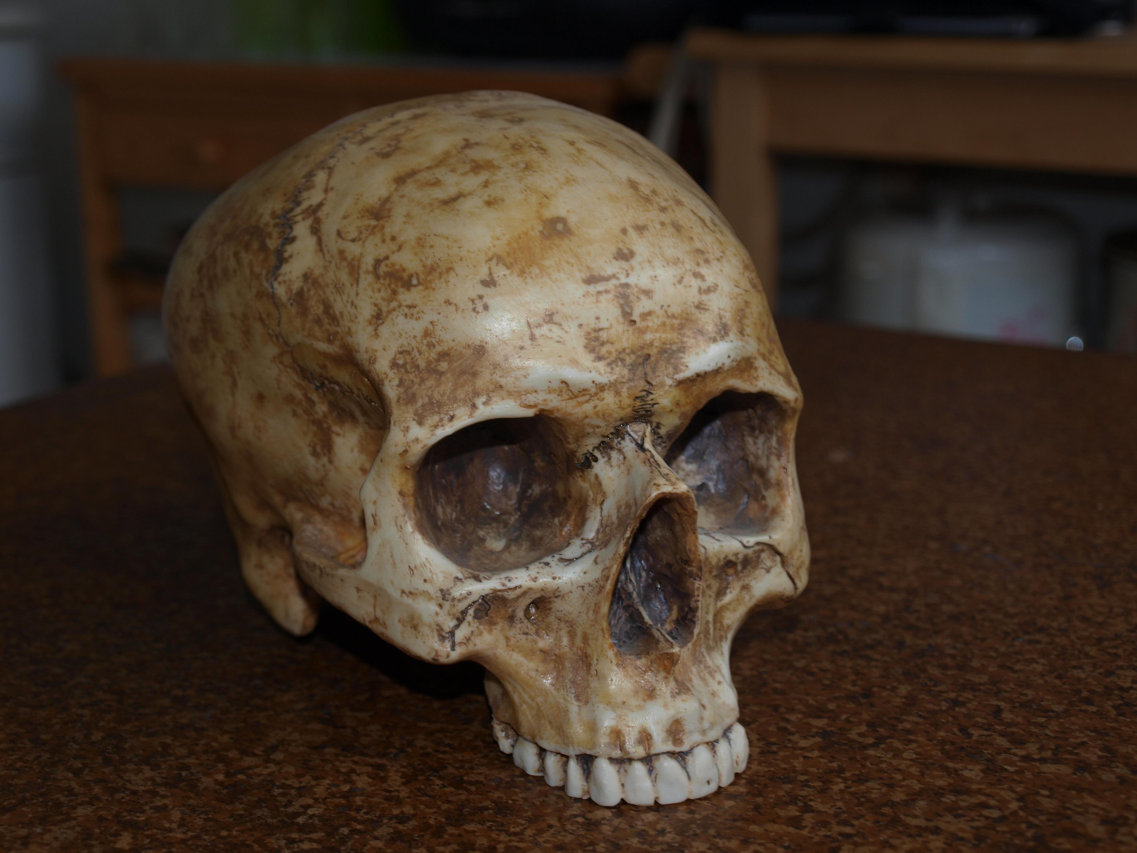 Skull Stock 03 by PsykoHilly