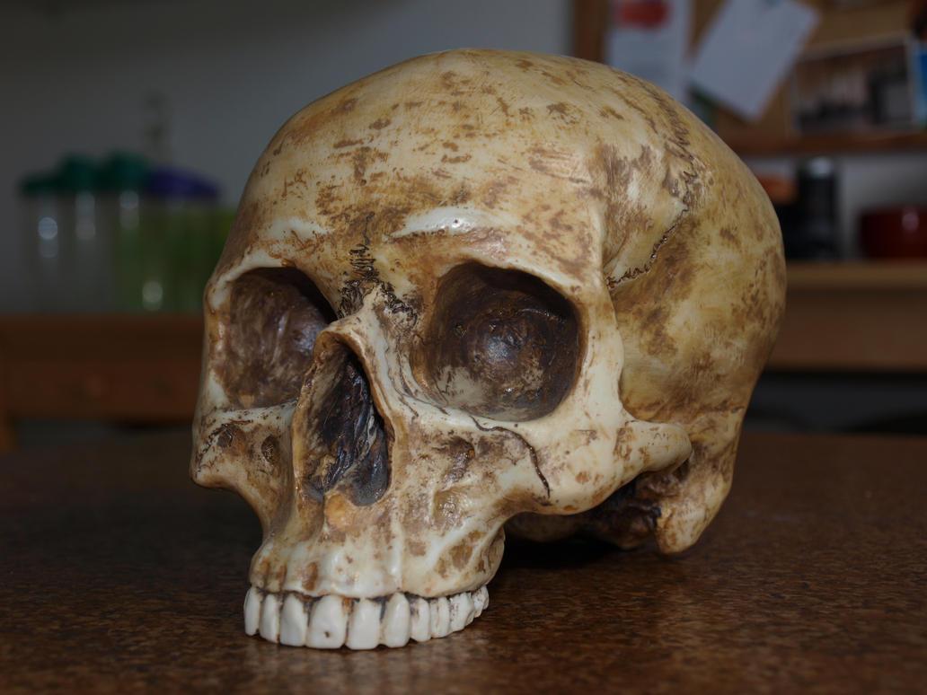 Skull Stock 06 by PsykoHilly