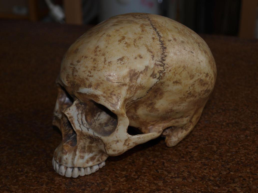 Skull Stock 07 by PsykoHilly