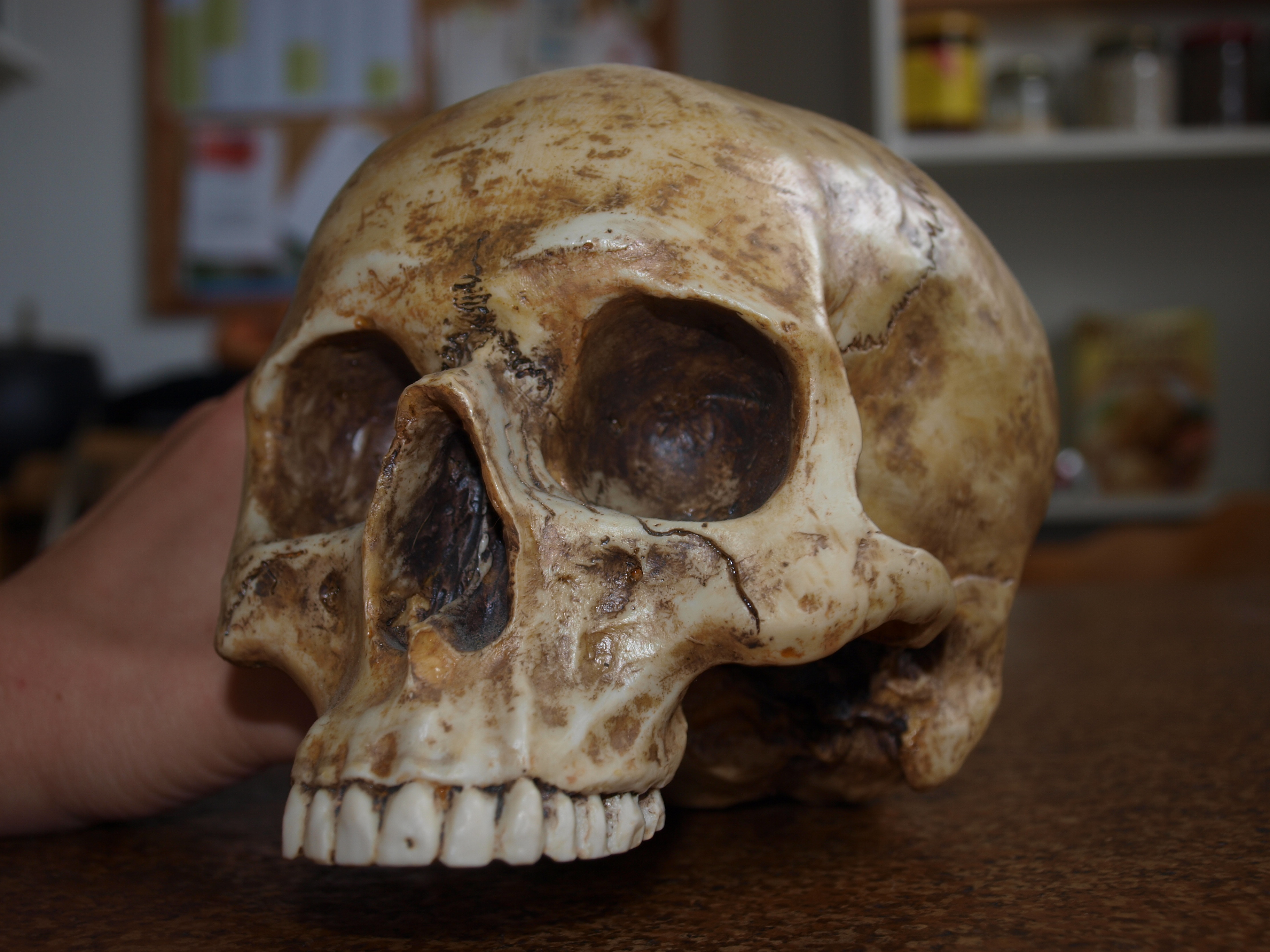 Skull Stock 09 by PsykoHilly