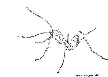 Long-legged spider ant by Mari-3