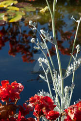 By Lake, Buschart Garden by iamintheprocess