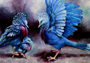 Victoria Crowned Pigeons (goura victoria)