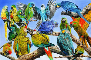 Endangered macaws by veracauwenberghs