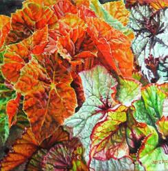 Begonias by veracauwenberghs