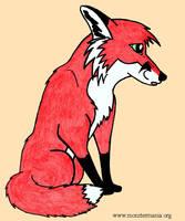 Shy Fox by jamieh