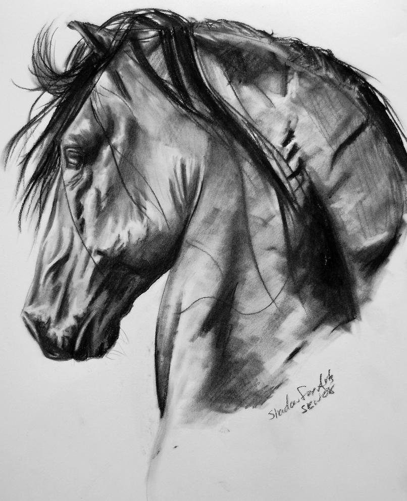 Peruvian Horse by xShadowfoxX