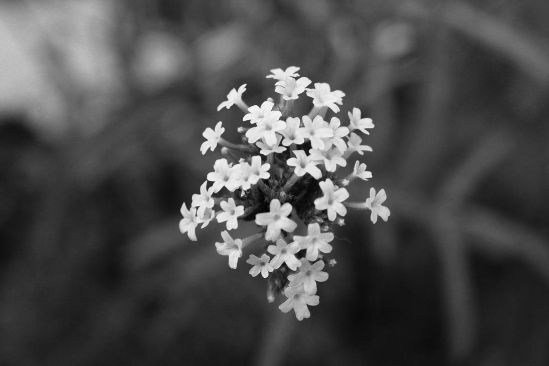 Black And White Flowers Ii By Lvlu On Deviantart