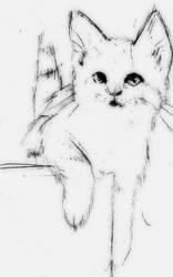 Kitten by NoRuLLa