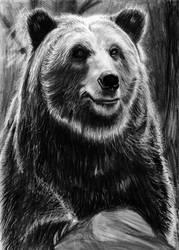Bear by NoRuLLa