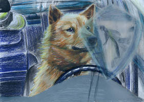 Sketch- Driving like a Dog by NoRuLLa
