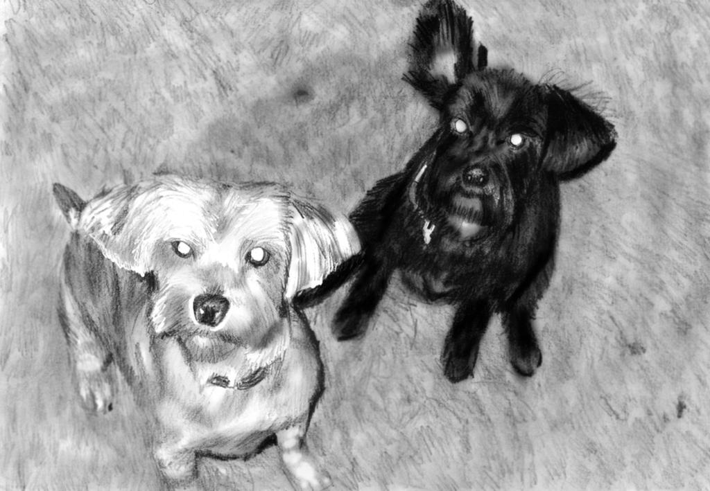 Request- Pets by NoRuLLa