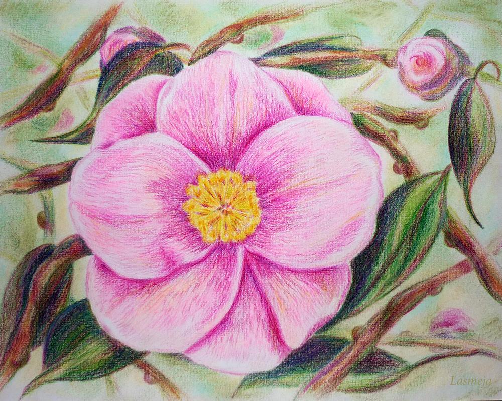 Pink flower by LasmejaLora