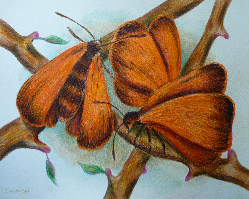 moths by LasmejaLora