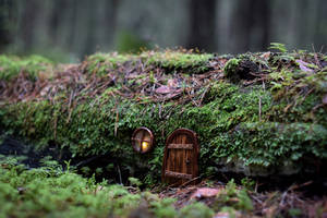 Door in the forest by ju1iu5
