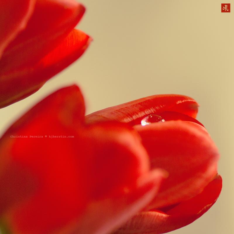 Red Passion by Kjherstin