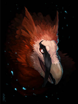 Commission: gryphon