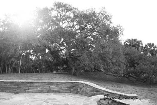 Large Lone Tree