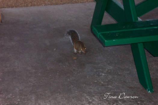Demented Squirrel
