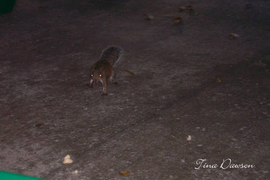Another Demented Squirrel