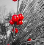 Christmas Berries - Edit