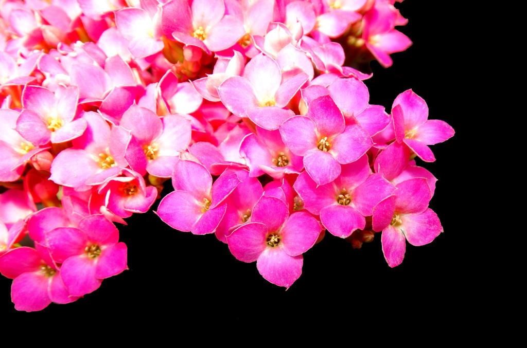 Flower 102213 by JenFruzz