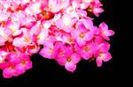 Flower 102213